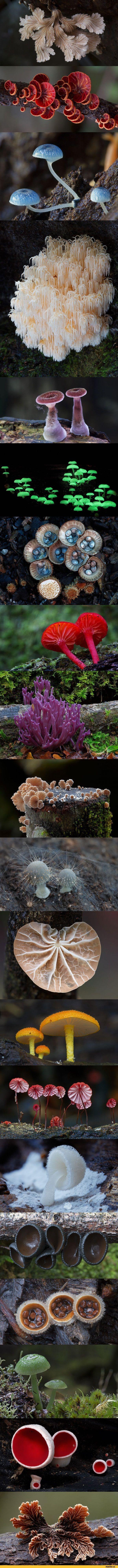 Волшебные грибы Австралии