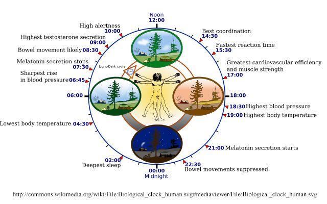 bioclockedit  circadian sleep source