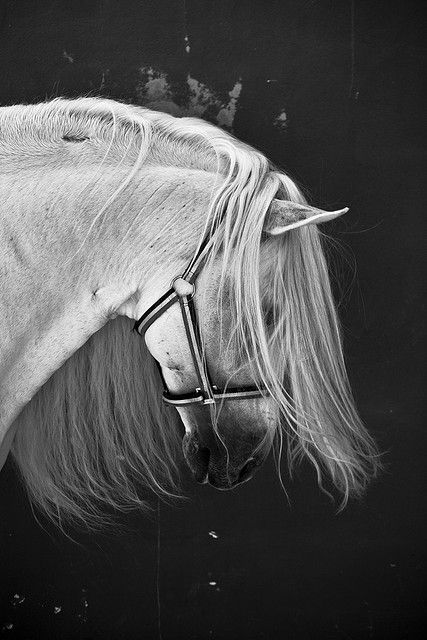 •♥• Andalusian
