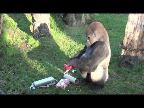 Santa visits Durrell's animals