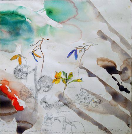 Bladderwort-species-II-Giraween-floodLR-plain-N.jpg (450×457)