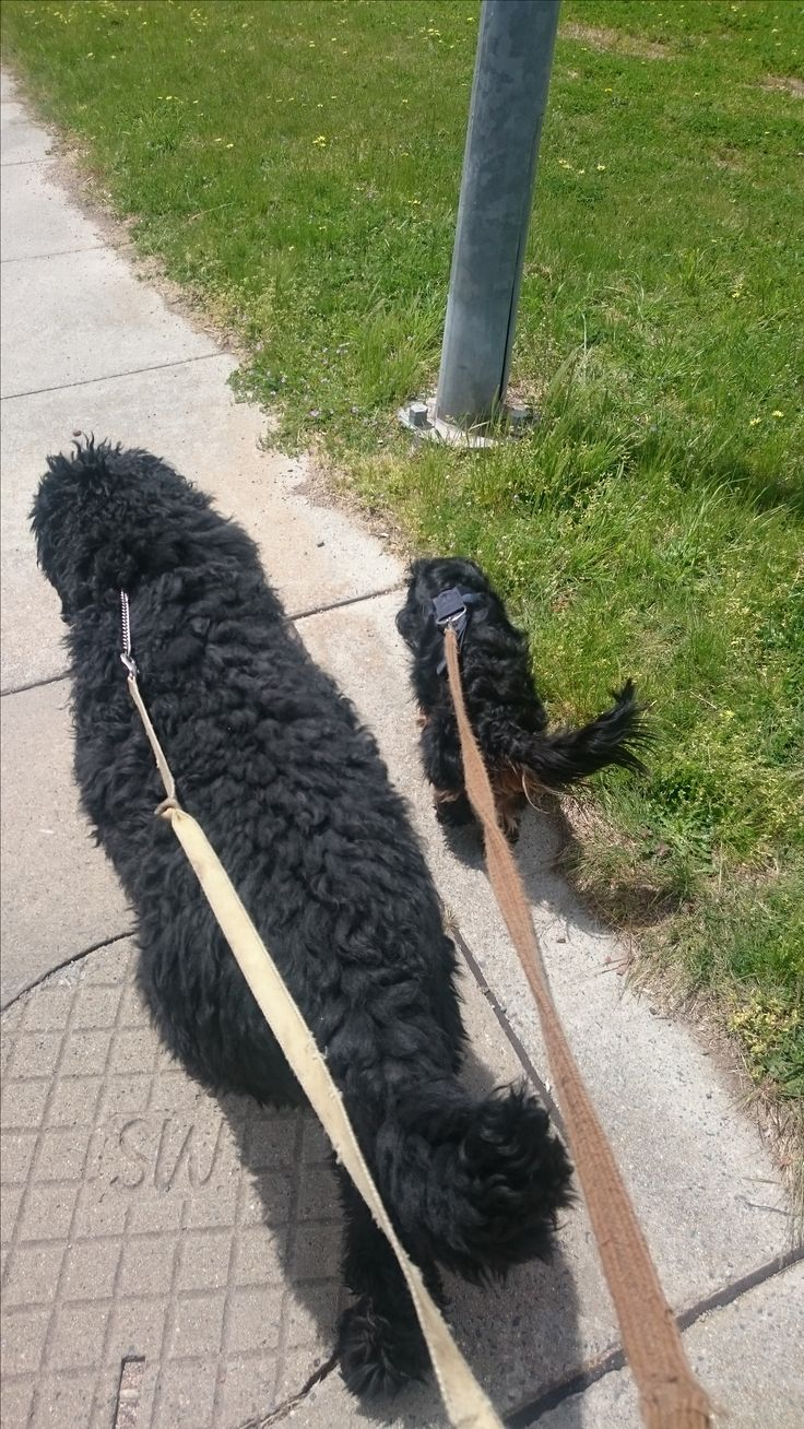 They love their walk