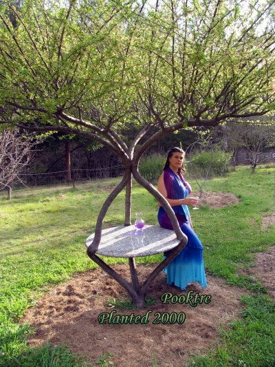 "shaping trees into art forms or furniture, etc... ""Grow a chair"": Living Tables, Gardens Ideas, Tables Pictures, Awesome Trees, Trees Tables, Outdoor Living, Houses Deco, Outdoor Stuff, Gardens Tables"