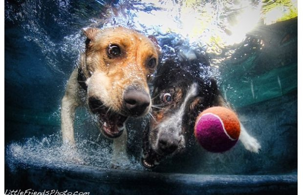 Underwater dogs...: Dogs Pics, Pet Photography, Friends Photo, Dogs Photography, Underwater Photography, Underwater Dogs, Seth Casteel, Dogs Portraits, Eye