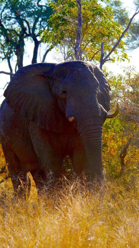 #Elephant at Mahango Park #Namibia #wildlife #Wetlands #self #drive #nature #travel #africa