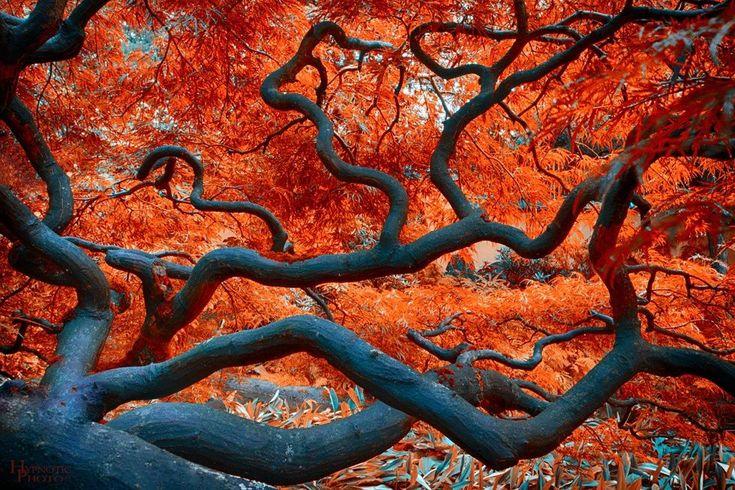 Branches by David Naman