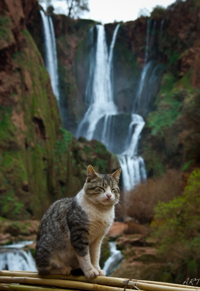 17 Best Images About Meditating Cats On Pinterest Wood
