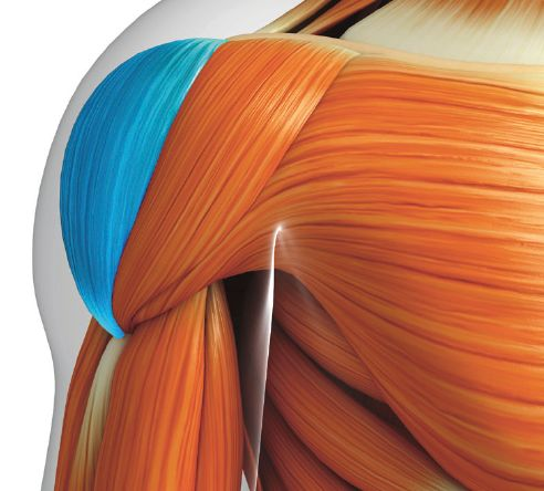 Artificiella muskler   smarttextiles.se