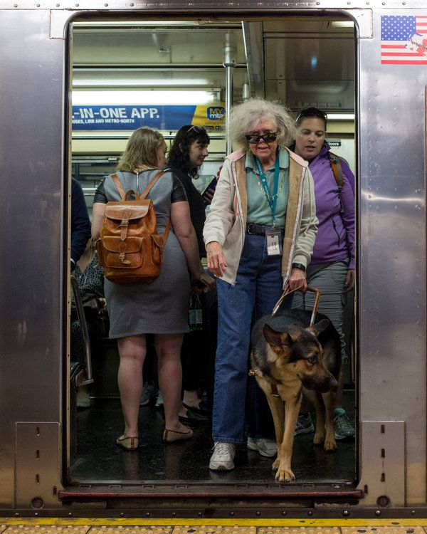 Seeing Eye Dogs In Training Take On Manhattan With Their New