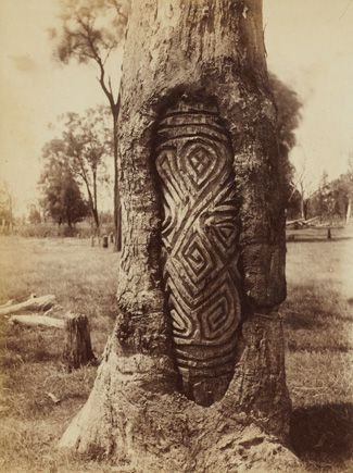 For thousands of years Aboriginal groups in central New South Wales marked important ceremonial sites by carving beautiful, ornate designs on the trunks of trees. The carvings, comprising symbolic motifs, intricate swirls, circles and zigzags, were intended to be long-lasting but, instead, only a handful of the trees on which they were carved are still alive today.
