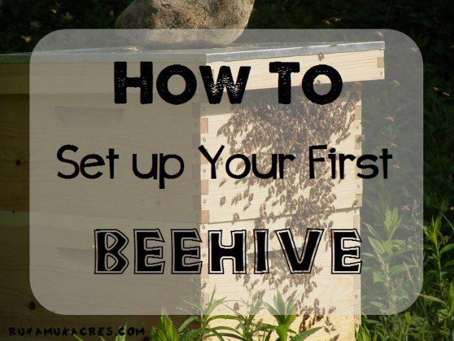 Stunning how to set up your first beehive BienenhaltungBienenzucht Im Garten Geh fteBienenstockHonigbienenLernenF llungGartenideenR ume