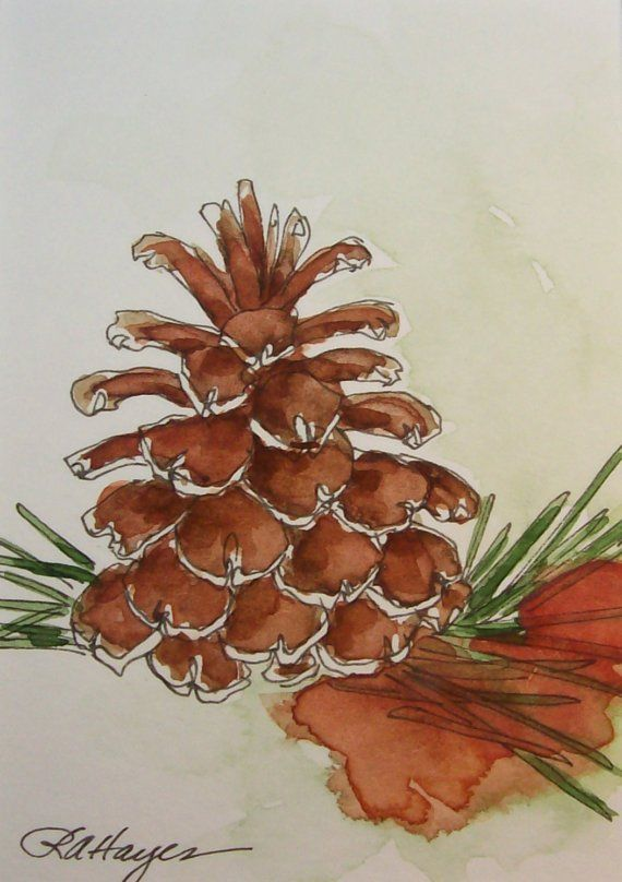 PINE CONE WATERCOLOR PAINTING ACEO HAYES                                                                                                                                                                                 More