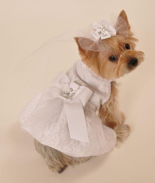 Satin & Lace Dog Wedding Dress...Starla...I love it!!!
