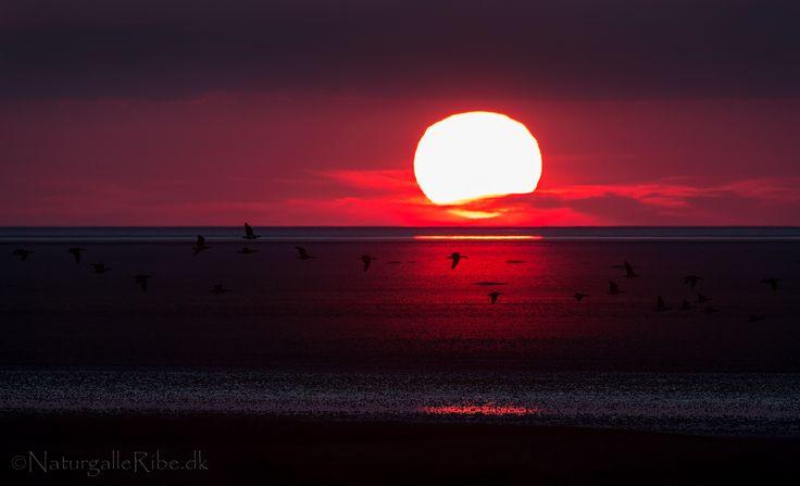 Solnedgang på Mandø