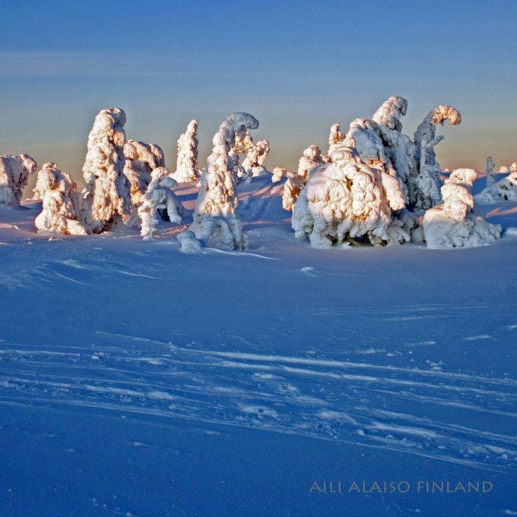Landscape from Ruka Kuusamo Finland by Aili Alaiso