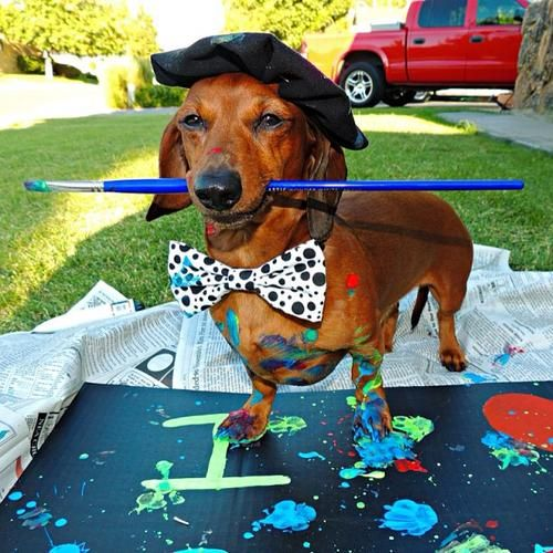 It's Time to Vote for the Dogster Halloween Costume Contest Finalists!   Dogster