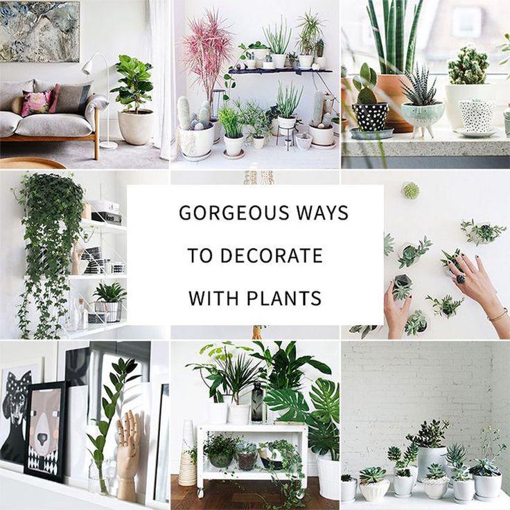 Best 25 Indoor Plant Decor Ideas On Pinterest Plant