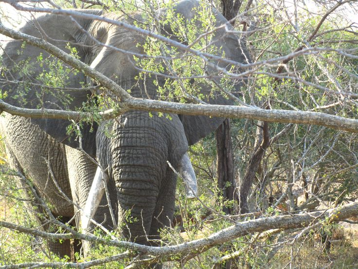 #elephant #BigFive #Klaserie #Safari
