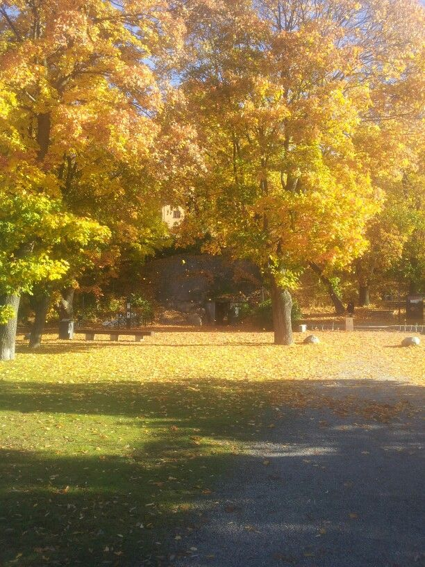 Autumn in Sweden #autumn #stockholm