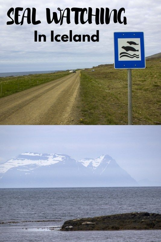 Seal Watching in Iceland - Hvammstangi and Vatnsnes Peninsula