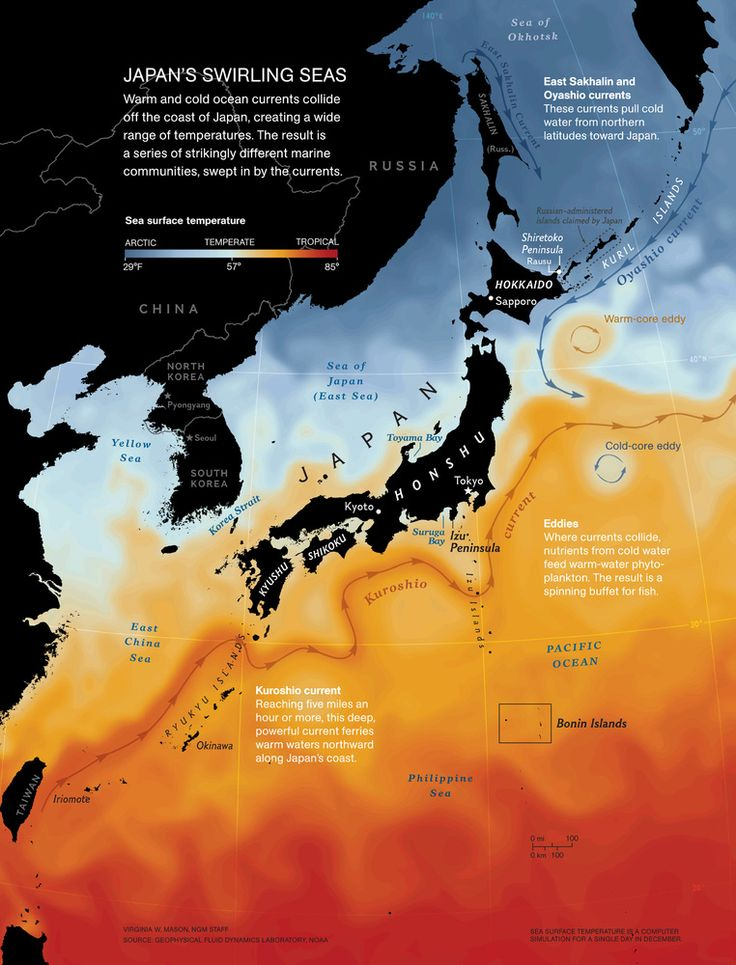 Japan's swirling seas - beautiful map of ocean temperatures around #Japan, by Virginia Mason National Geographic #ngm #nationalgeographic