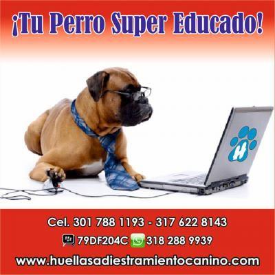 Tu Perro Súper Educado http://cali.anunico.com.co/