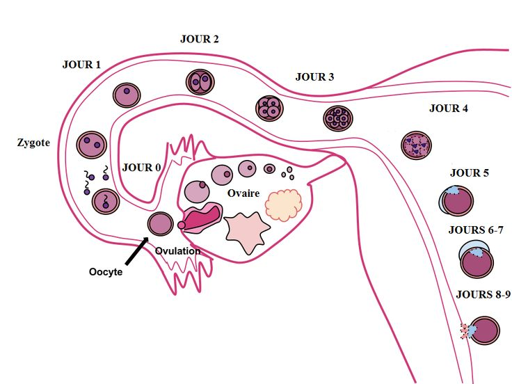100+ Signs Of Implantation Bleeding Twins – yasminroohi