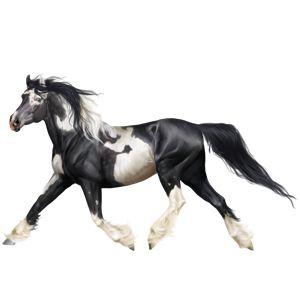 Санет, Pferd Friese Rappe #36847643 - Howrse