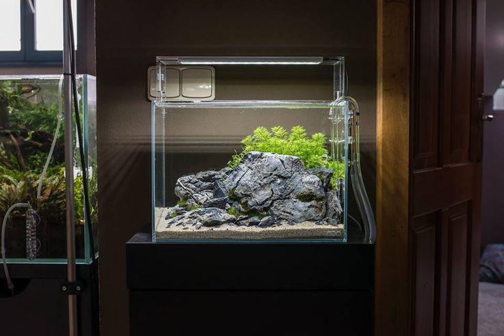 ... aquascaping furniture ide aquascape aquascaping aquarium aquarium