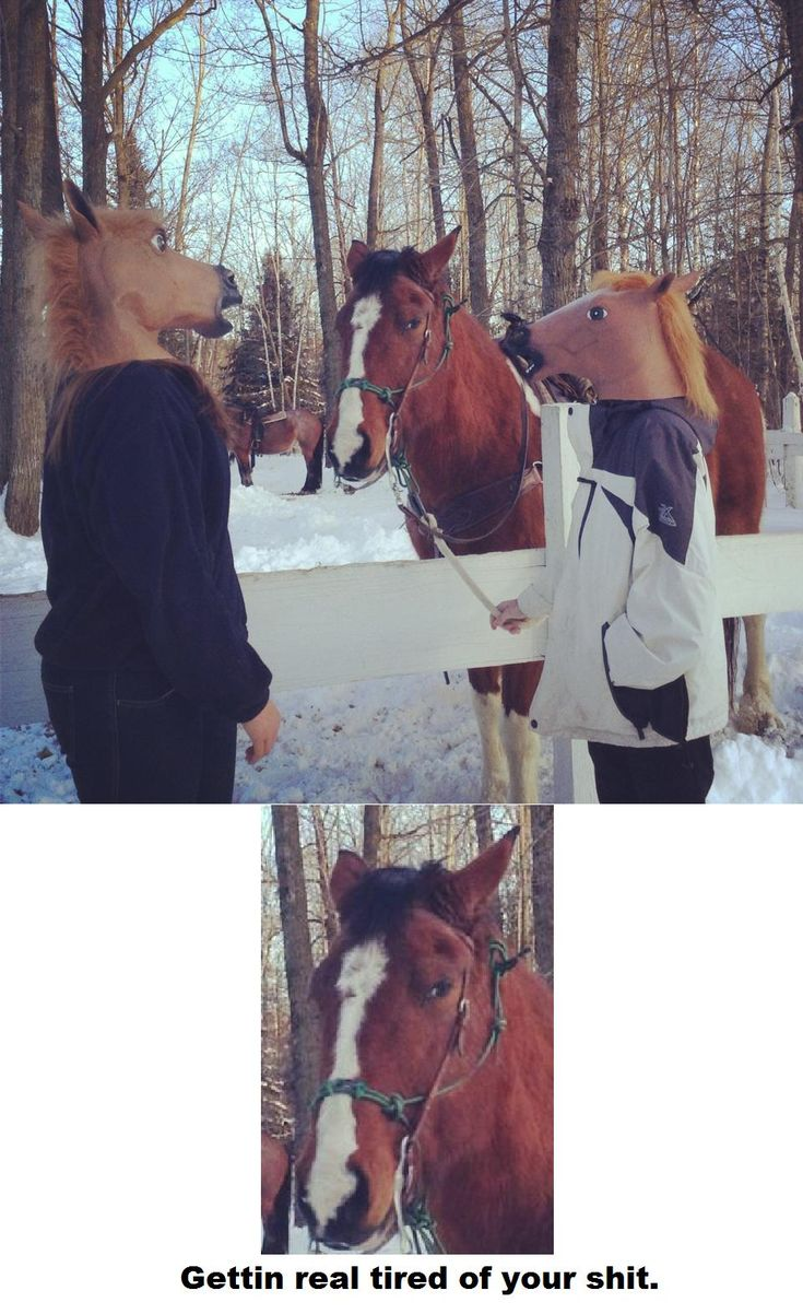 My friends went to a horse ranch today. - Imgur