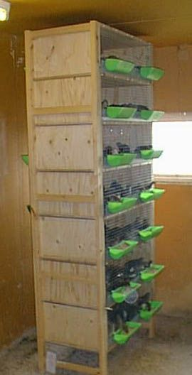 Quail cage / chicken cage for when they outgrow the brooder