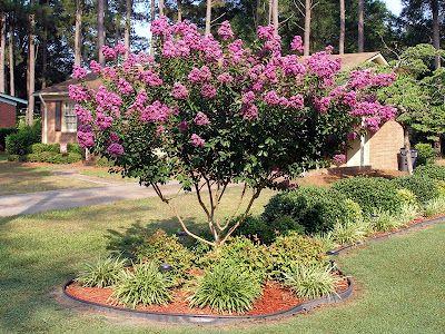 crepe myrtle landscaping front