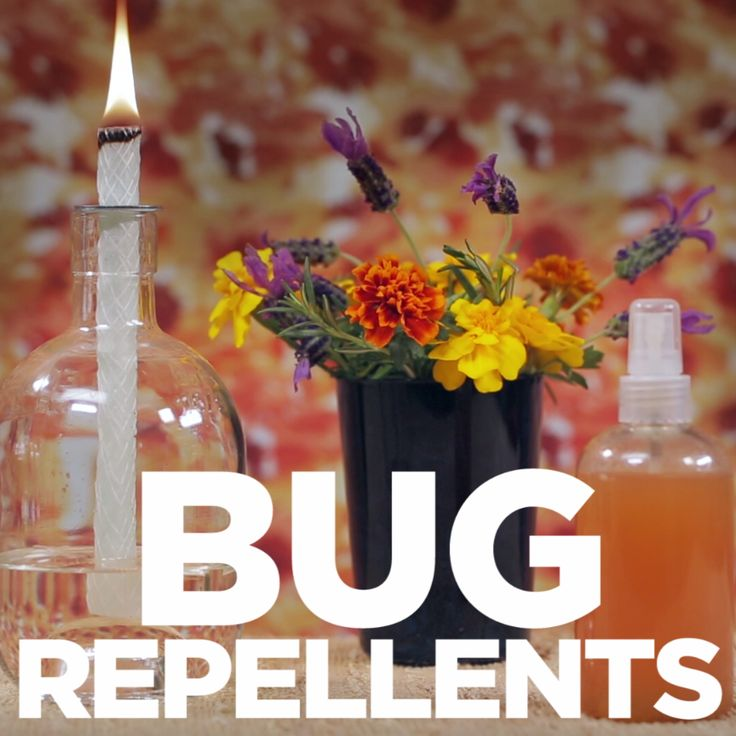 3 DIY Natural Bug Repellants