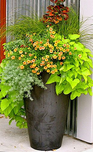 Part shade: Coleus Tilt-a-Whirl, carex grass, lime sweet potato, apricot million bells, silver lotus vine
