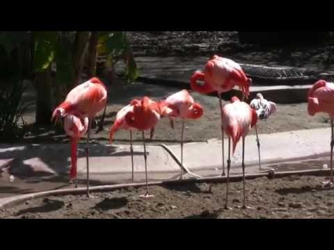 BEAUTIFUL     FLAMINGOS     BIRDS