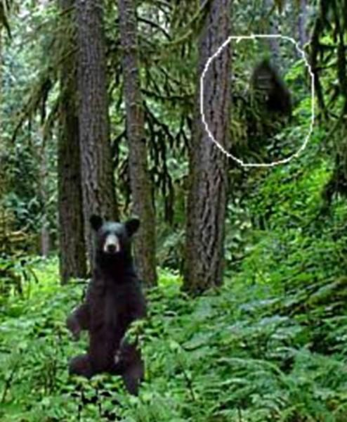 The following blurb is the only comment we received from Donald, who sent the image to us:  Here is a picture that I have of a bear and what appears to be a Bigfoot in the background. I circled the possible Sasquatch for emphasis.
