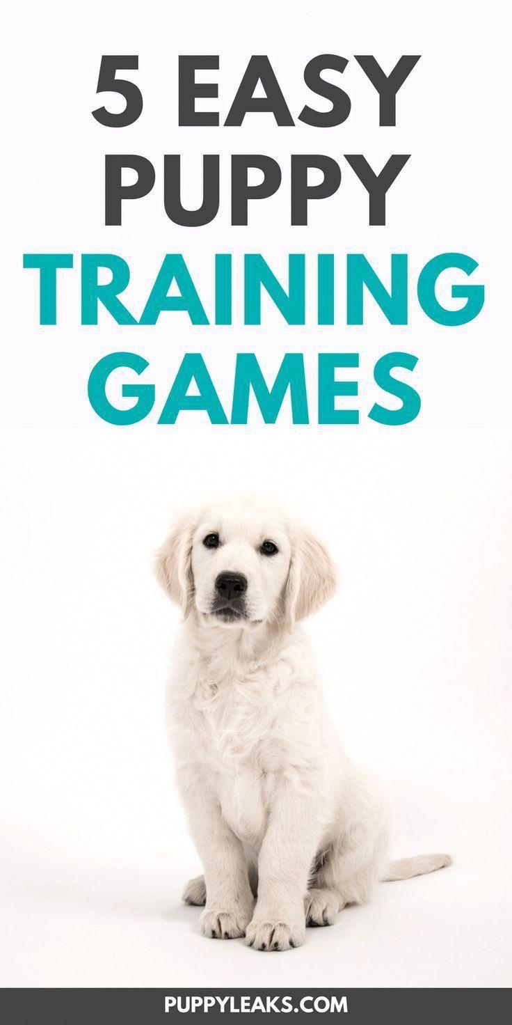 5 Easy Puppy Training Games Dog Behavior Dog Training