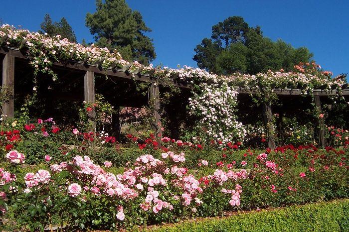 cheeseboard and berkeley rose garden afternoon Bay Area Bucket