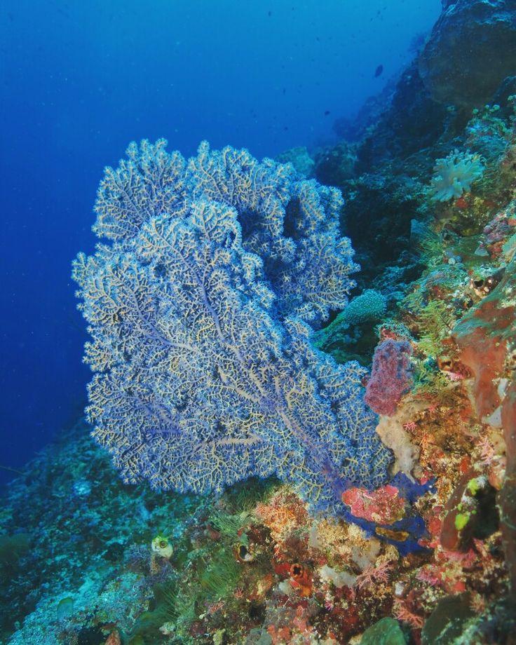 Beauty of underwater Grand Luley Resort