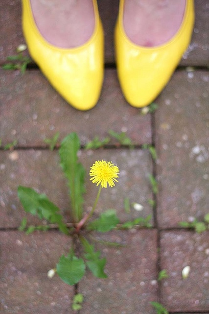 You never know what is at your feet - you just have to look! just dandelion
