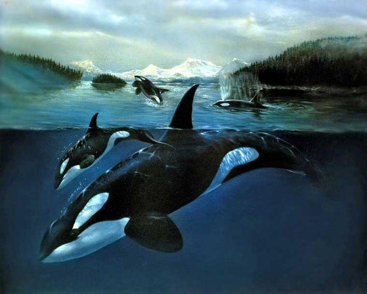 Orca Whale #GILOVEBC