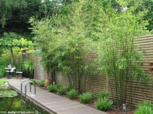 15 Pflanzen Sichtschutz Garten 15 Pflanzen Sichtschutz Garten Pflanzen Sichtschutz Garten Pflanzen In 2020 Garden Privacy Screen Garden Privacy Outdoor Landscaping