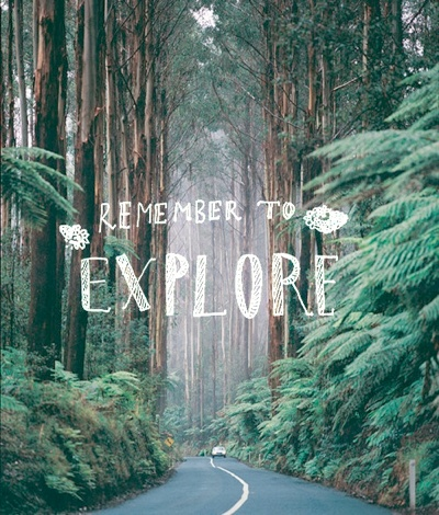 Explore: The Roads, Redwood California, Black Spurs, Northern California, Redwood Forests, Victoria Australia, Roads Trips, New Zealand, Flowers Trees