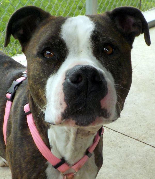 Pets For Adoption Petfinder Pet Adoption Pets Adoption
