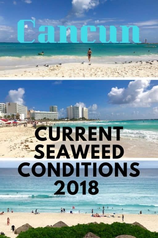 Traveling to Cancun? Here's What You Need to Know about Seaweed