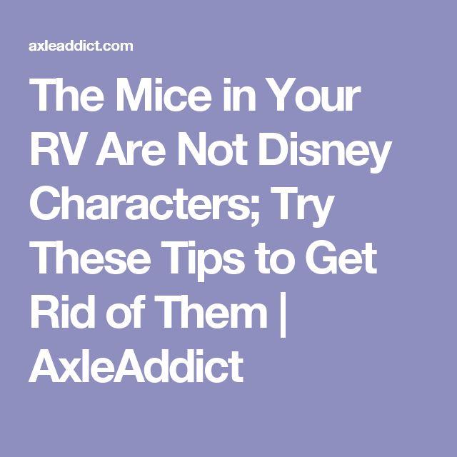 how to get rid of mice in your caravan