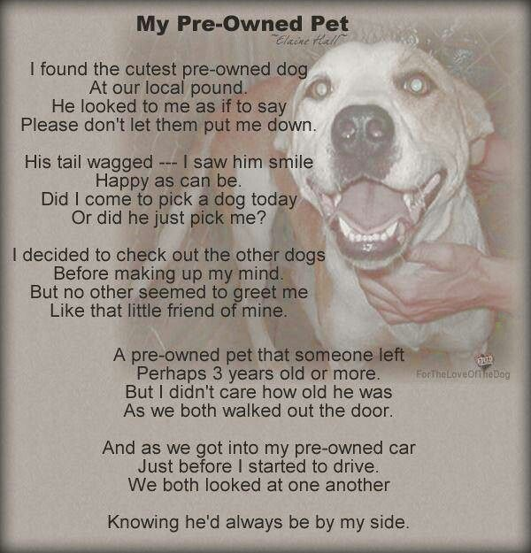 Pre Owned Pet poem | Pitbulls | Dogs, Rescue dogs, Dog poems