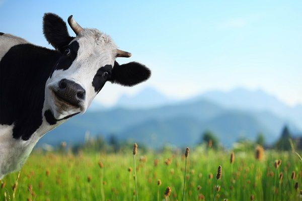 Per un migliore benessere animale, scegli i nostri destratificatori Il nostro sistema di ventilazione controllato,...
