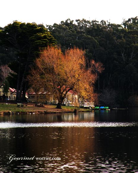 Autumn leaves by the lake, Daylesford