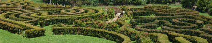 Bago Maze at Bago Vineyards in Australia (click on it for non blurred version)